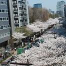 桜20150330_123842
