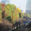 秋の靖国神社の木々2-1