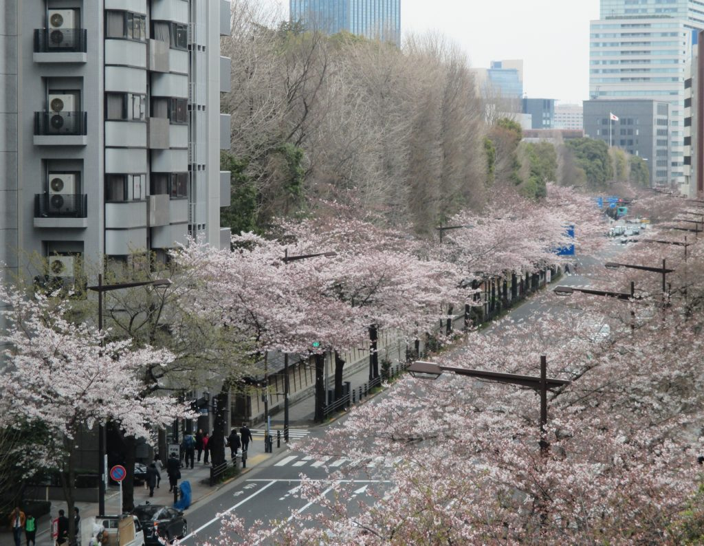 桜_20170331