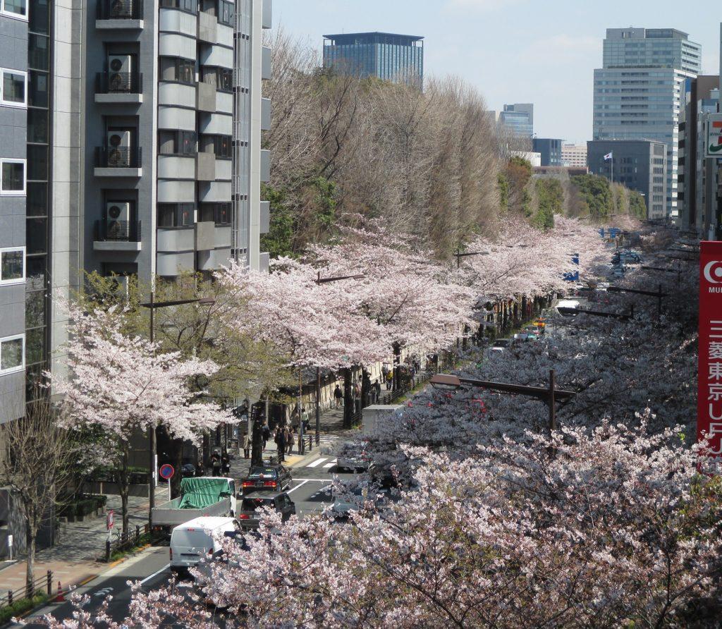 桜_20170403